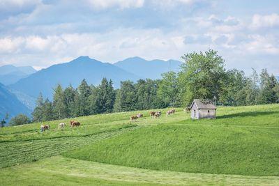 Summer landscape in Gallzein