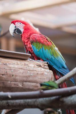 Papagei im Schmetterlingshaus