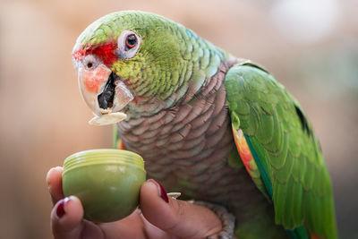 Papagei in der Schmetterlingswelt