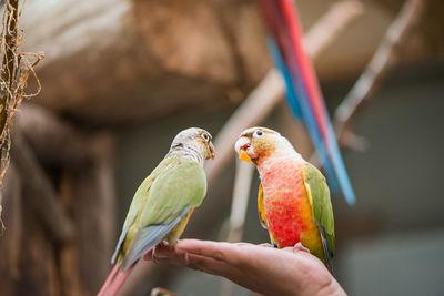 Papageien im Schmetterlingshaus