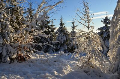 winter_snowy_trees_schnee_baeume.jpg
